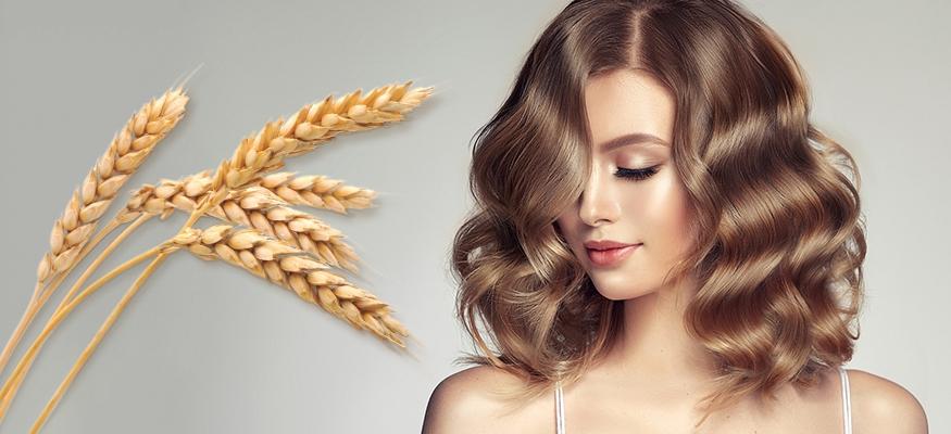 Протеин пшеничный – супергерой для поврежденных волос